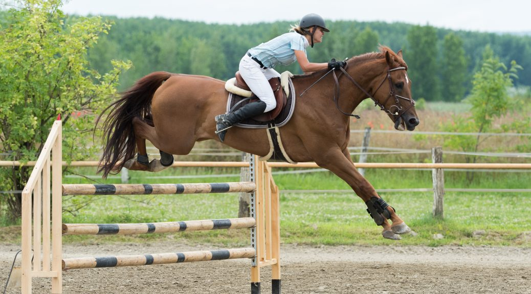 Necessary equipment for equestrian sports